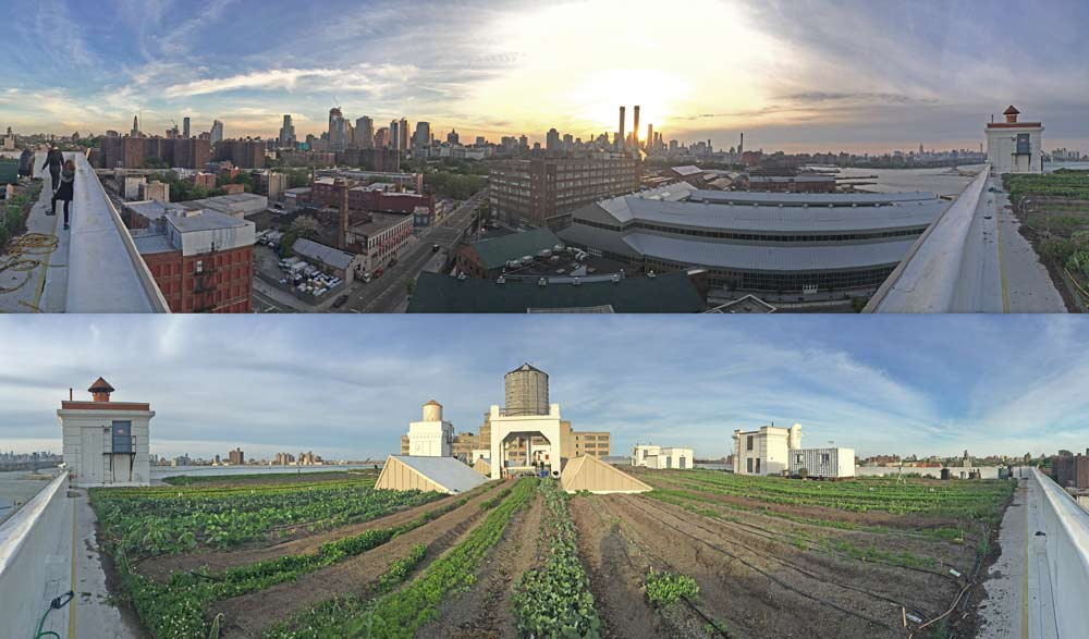 the brooklyn grange roof top garden in the brooklyn navy yard